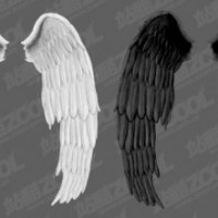 white_wings_and_black_wings_psd_layered_177590